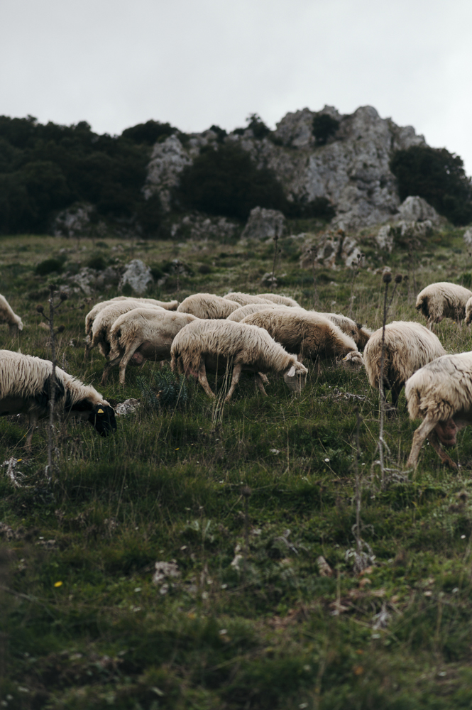 Katharina Pflug  Fotografie & Gestaltung contare le pecore in cielo formaggio